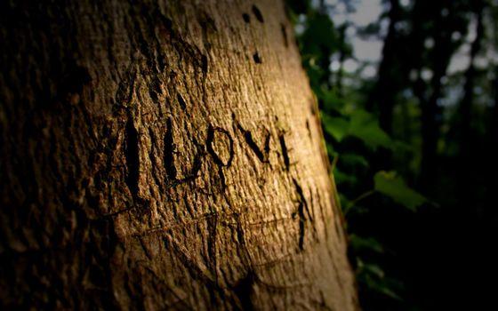 Бесплатные фото дерево,кора,вырезка,слова,i love,я люблю,настроения,разное