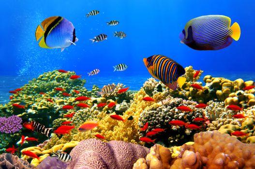 Заставки глубины океана, рыбы, разноцветные