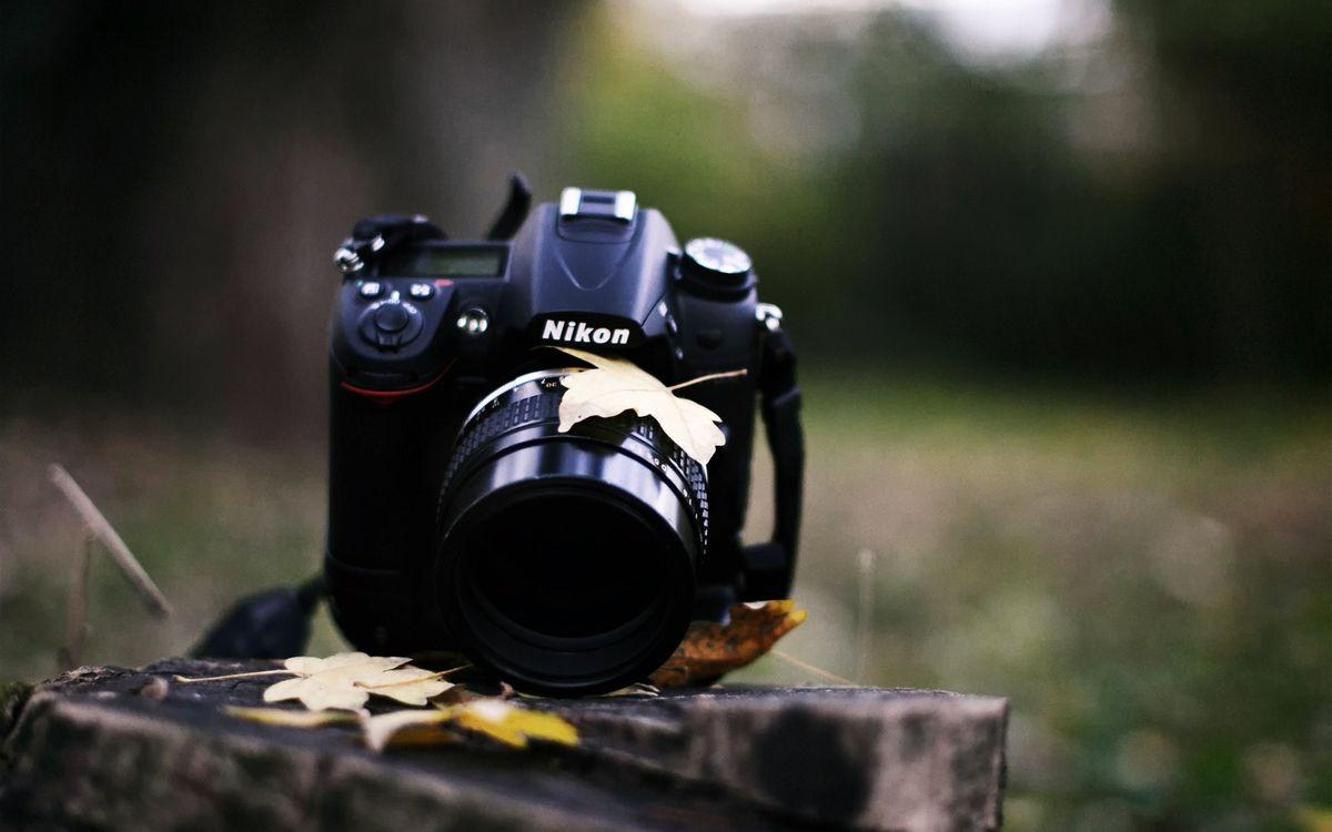 Фото бесплатно камера, фото, фотоаппарат, лист, пень, объектив, разное, разное