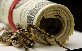 Photo free banknotes, dollars, spider
