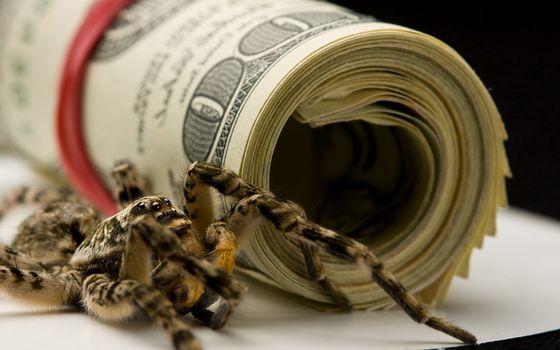Photo free banknotes, dollars, spider