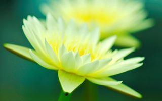 Бесплатные фото лепестки,белые,желтые,стебель,зеленый,листья,цветы