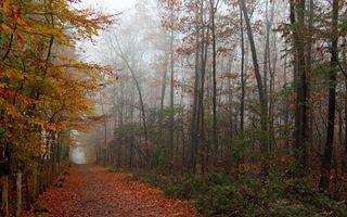 Заставки лес, тропинка, опушка, листья, листопад, осень, ноябрь, холод, деревья, сырость, природа, пейзажи