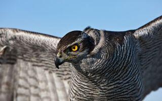 Бесплатные фото орел,хищник,клюв,глаза,желтые,перья,крылья