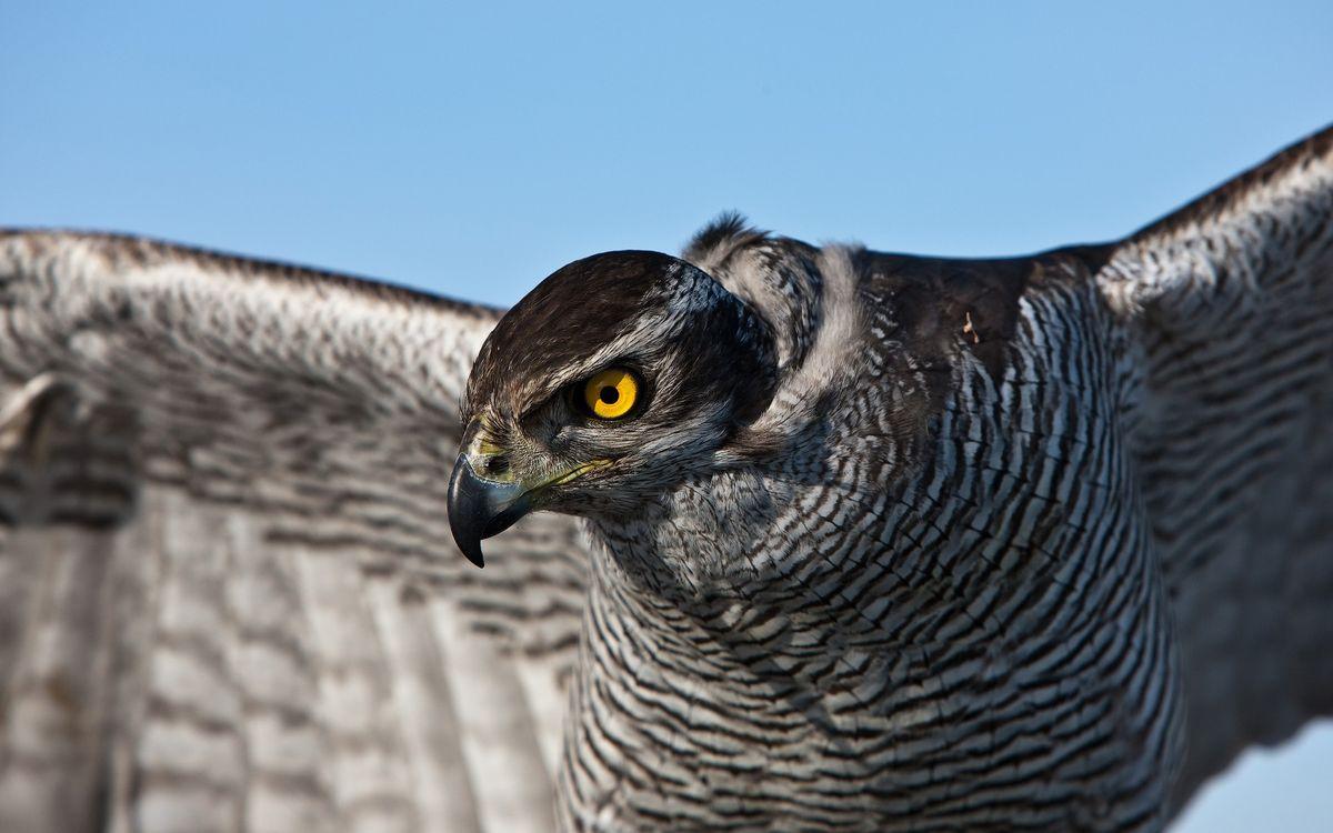 Фото бесплатно орел, хищник, клюв - на рабочий стол