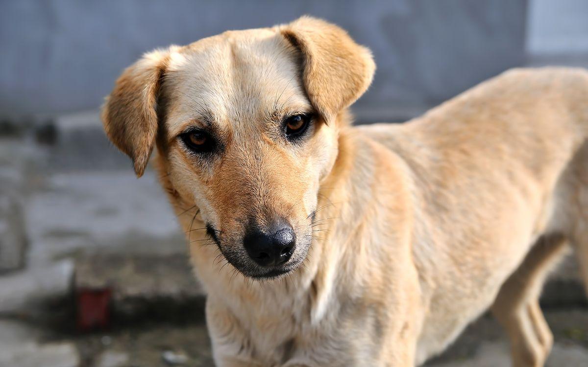 Фото бесплатно пес, щенок, ошейник - на рабочий стол