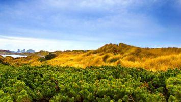 Бесплатные фото поле,трава,небо,облака,урожай,растения,природа