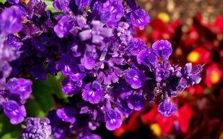 Фото бесплатно цветы, лепестки, аромат