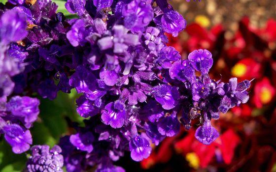 Бесплатные фото цветы,лепестки,аромат,бутоны,тычинки,куст,клумба