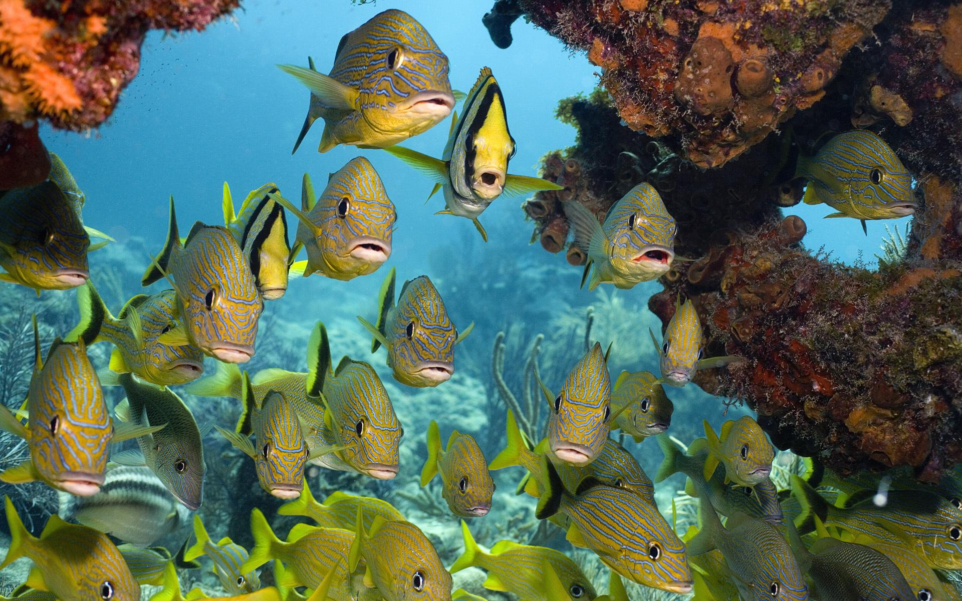 Рыбы море риф подводный мир картинки