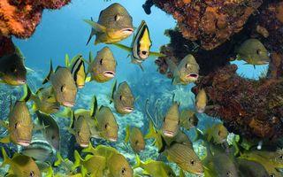 Фото бесплатно рыбы, море, риф