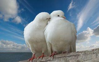Бесплатные фото romance,love,trunk,dove,peace,kiss,pigeon