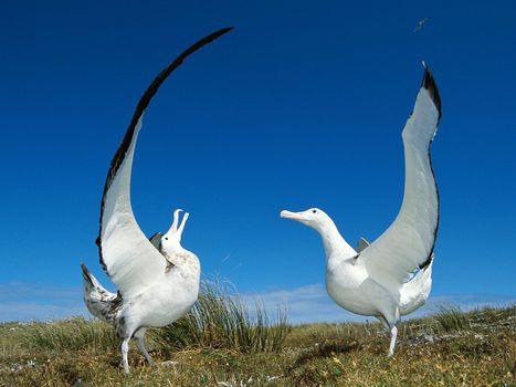 Download animals, birds photo site fonwall