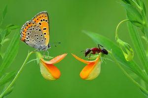 Фото бесплатно цветок, бабочка, муравей