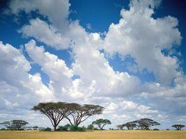 Фото бесплатно облака, вдали, деревья