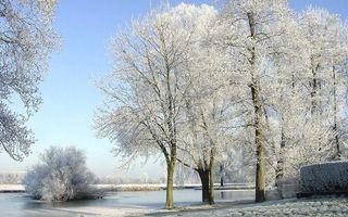 Заставки деревья, снег, изморозь