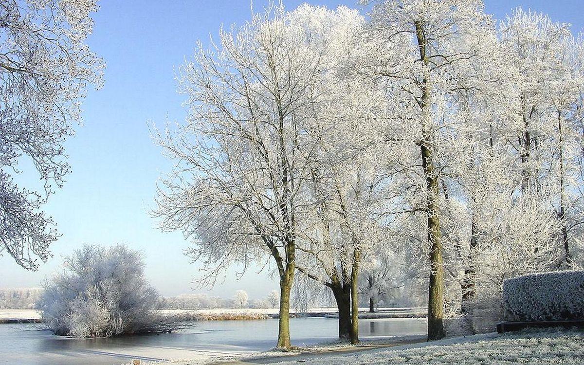 Обои деревья, снег, изморозь картинки на телефон