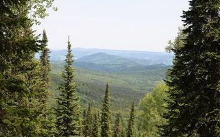 Заставки елки, сосны, деревья, верхушки, иголки, холмы, пейзажи, природа