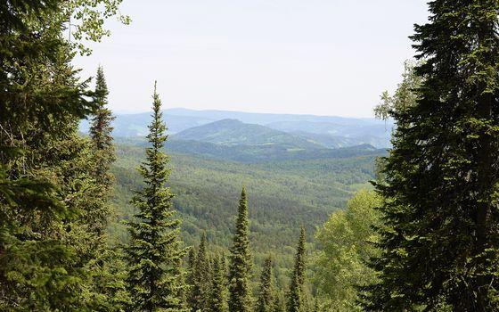 Бесплатные фото елки,сосны,деревья,верхушки,иголки,холмы,пейзажи,природа