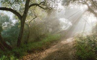 Бесплатные фото тропинка,лес,деревья,лучи,солнца,природа