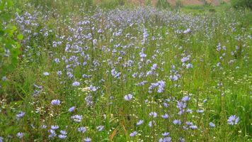 Фото бесплатно цветы, природа, лето