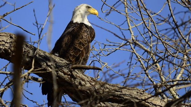 Photo free bald eagle, beak, yellow