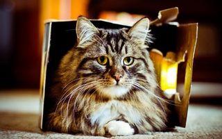 Бесплатные фото кот,пушистый,полосатый,шерсть,нос,уши,усы