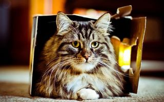 Заставки кот, пушистый, полосатый