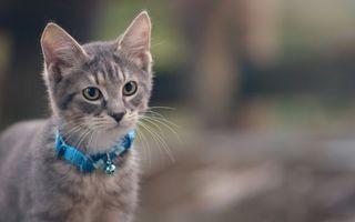 Фото бесплатно котенок, морда, глаза