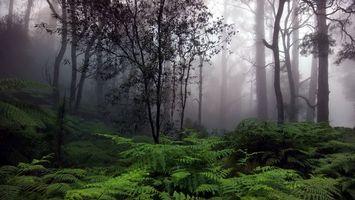Бесплатные фото лес,деревья,ветки,туман,папоротник,зеленый,природа