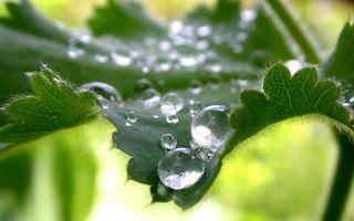 Фото бесплатно листья, зеленые, вода