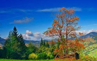 Фото бесплатно горы, пейзажи, поле