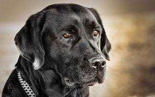 Фото бесплатно пес, глаза, взгляд