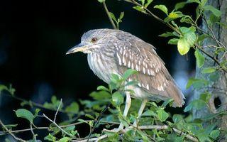 Бесплатные фото птица,перья,крылья,оперение,лапки,клюв,глаза