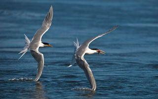 Фото бесплатно птицы, полет, крылья