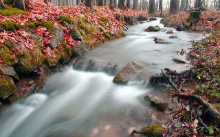 Фото бесплатно река, осень, листва