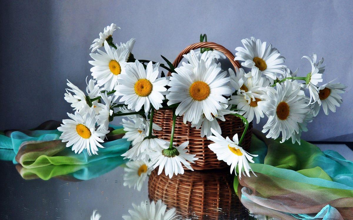 Фото бесплатно ромашки, лепестки, серединка, желтая, ваза, корзина, плетение, платок, стол, цветы, цветы