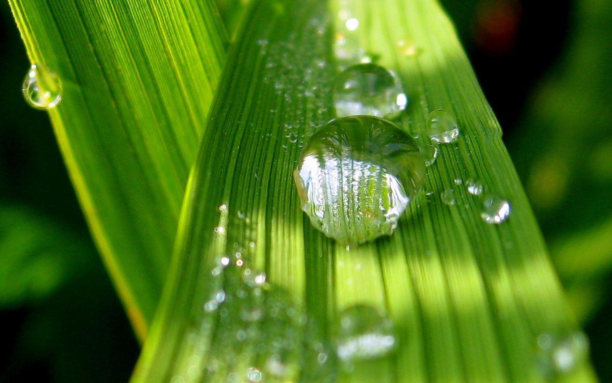 Фото бесплатно трава, зеленая, прожилки, капли, вода, роса, макро, макро