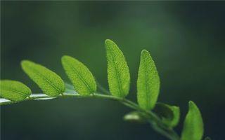 Фото бесплатно трава, ветка, листья, зелень, зеленые, поляна, фото, жилки, фон, зеленый, макро, природа