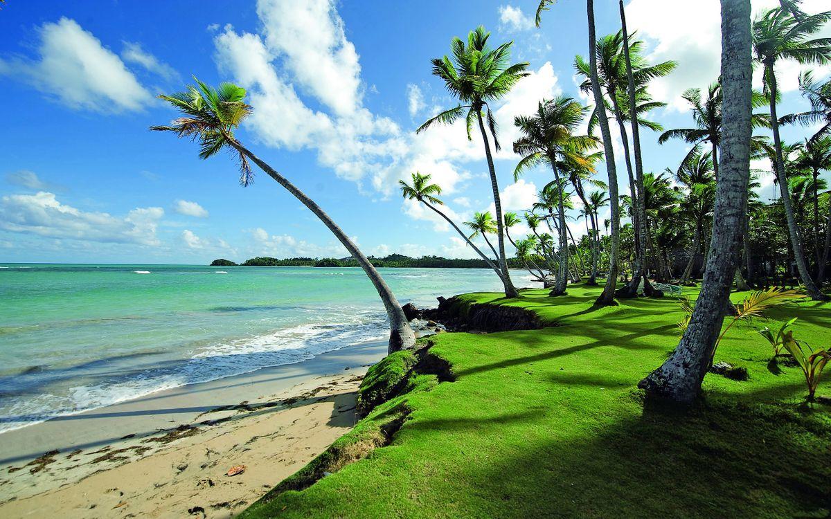 Фото бесплатно пляж, природа, пальмы - на рабочий стол