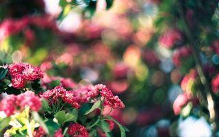 Фото бесплатно цветки, клумба, розовые