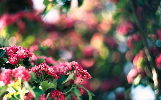 Photo free flowers, flowerbed, pink