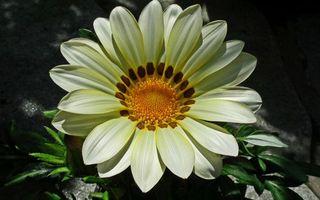 Заставки цветки, лепестки, листья