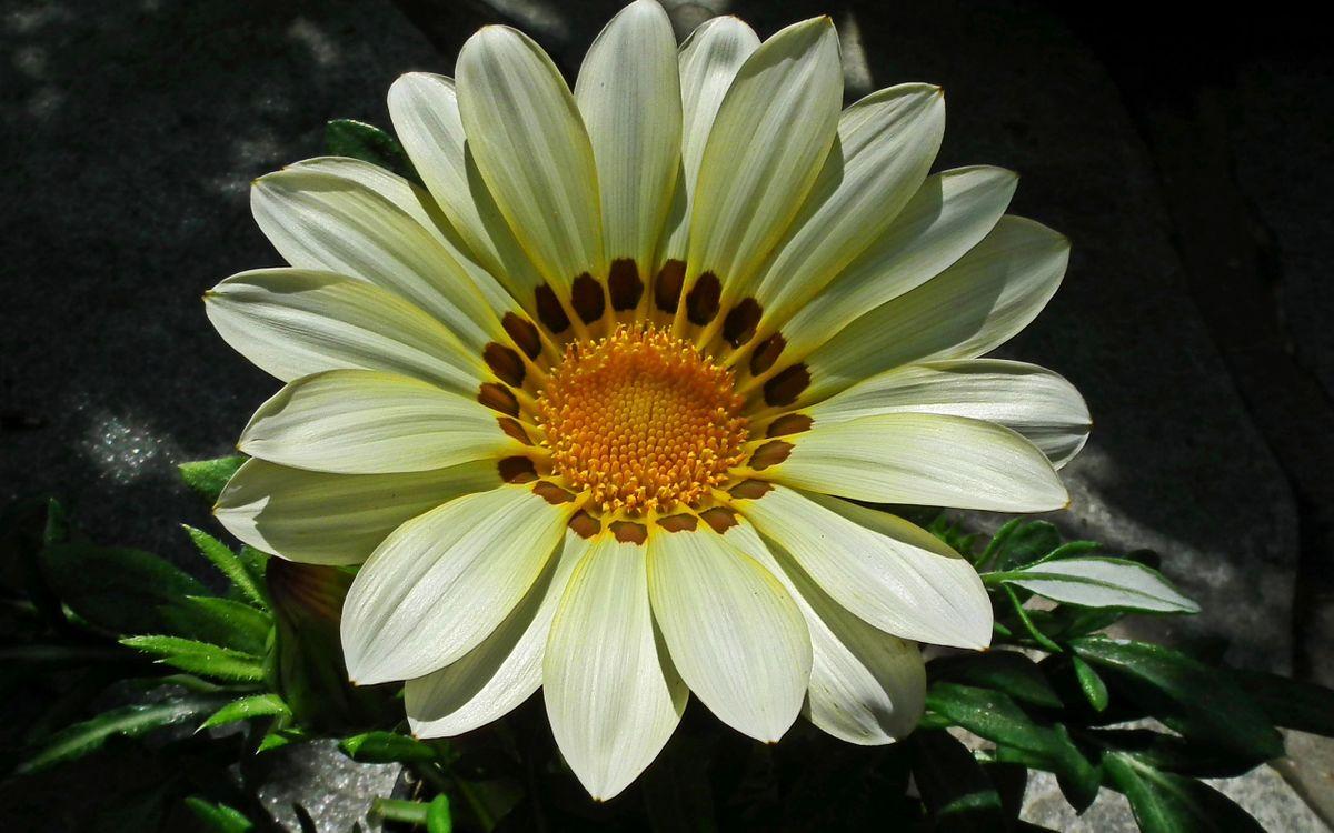 Фото бесплатно цветки, лепестки, листья, тычинка, серединка, стебель, весна, лето, тепло, макро, цветы, цветы
