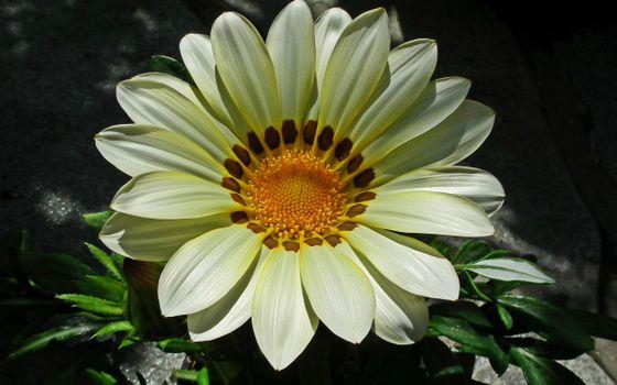 Бесплатные фото цветки,лепестки,листья,тычинка,серединка,стебель,весна,лето,тепло,макро,цветы