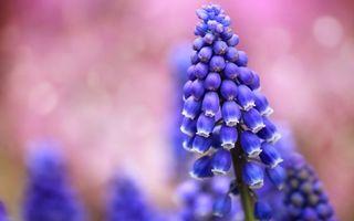 Фото бесплатно цветок, бутоны, листья