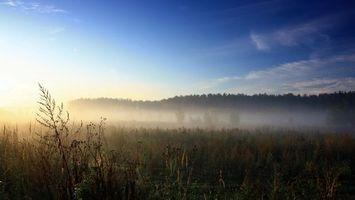 Бесплатные фото туман,трава,деревья,лес,небо,солнце,природа