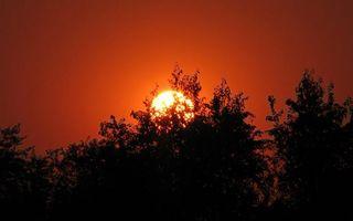 Фото бесплатно красный, деревья, солнце