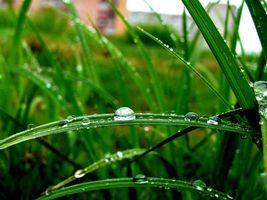 Фото бесплатно капли, после дождя, на траве