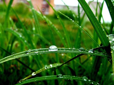 Photo free drops, after a rain, on a grass
